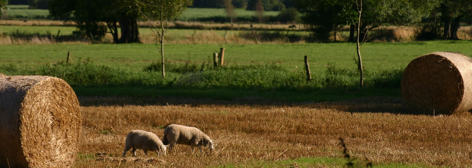 Download a copy of the 'Explore the Weald Moors' guide