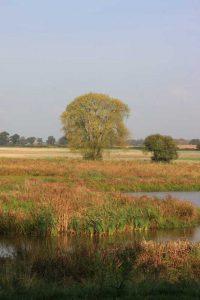 wall-farms-restored-wetland-sb