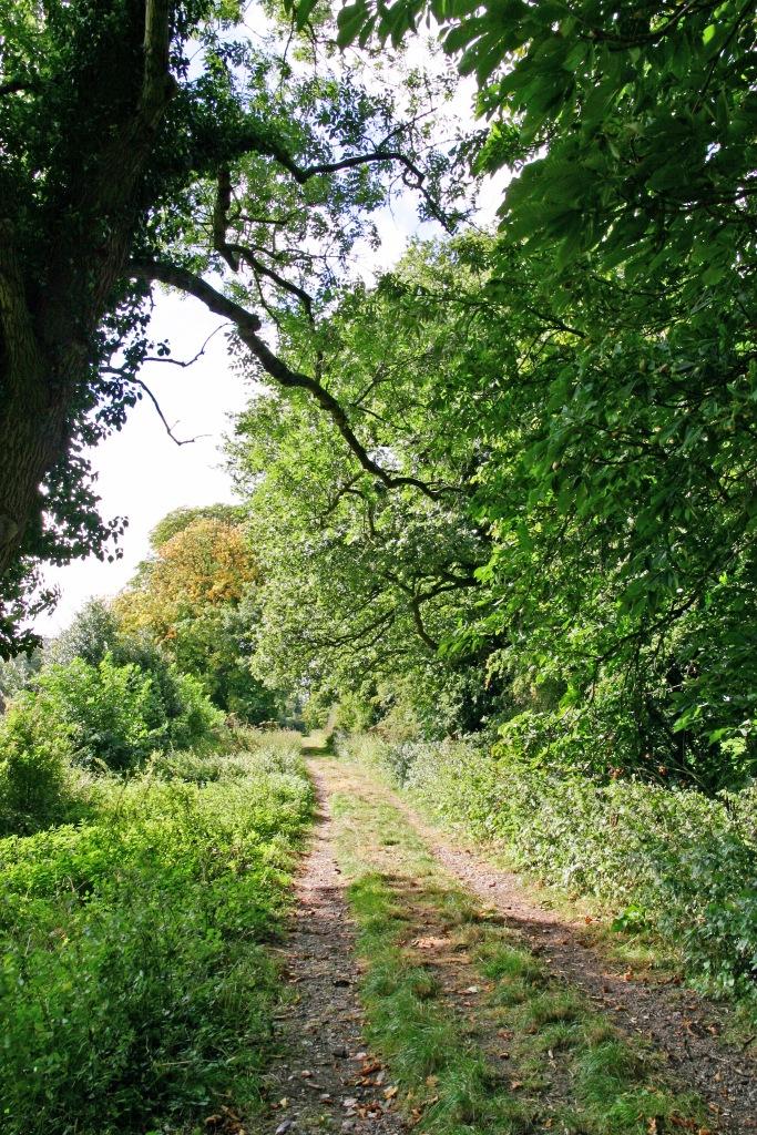 Kynnersley-Drive-Weald-Moors-Drainage-Improvement