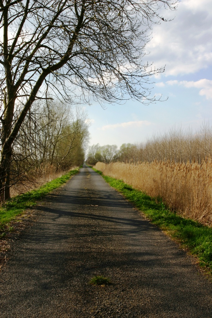 Crudgington-Drive-Weald-Moors-Improvement-Drainage