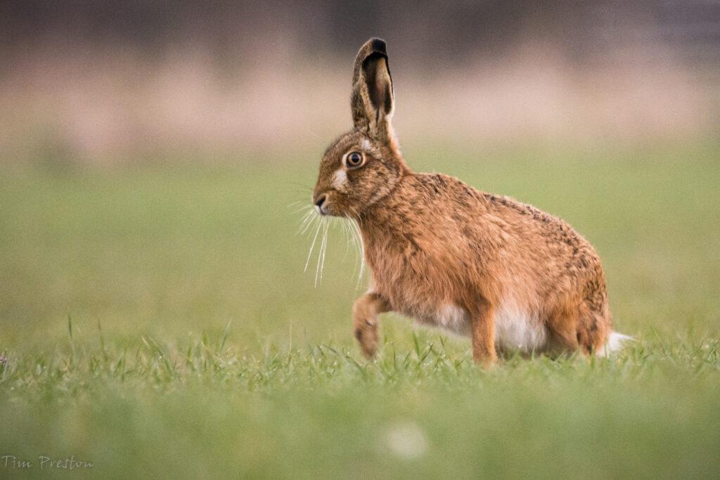 Hare-Weald-Moors-Shropshire